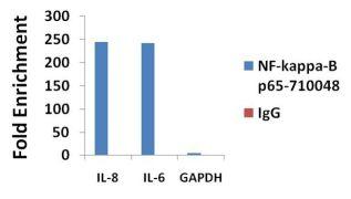 NFkB p65 Antibody (710048)