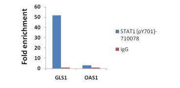 Phospho-STAT1 (Tyr701) Antibody (710078)