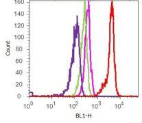 FAK / PTK2 Antibody (710119)