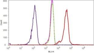 P-Selectin Antibody (710281)