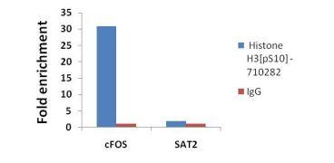 Phospho-Histone H3 (Ser10) Antibody (710282)