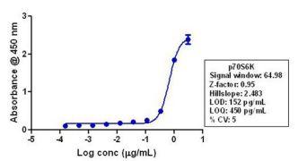 p70 S6 Kinase Antibody (710285)