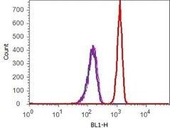 Phospho-Tau (Ser396) Antibody (710298)