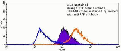 RFP Tag Antibody (710530)
