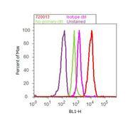 Phospho-Lyn (Tyr507) Antibody (720013)