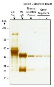 Comparison of Protein L beads for mouse IgG purification