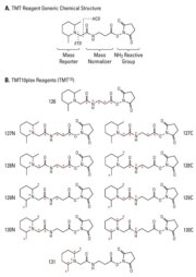 Structural design of the amine-reactive Tandem Mass Tag™ Reagents