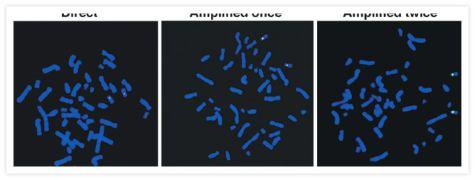 Fluorescein/Oregon Green Antibody (A-11090)