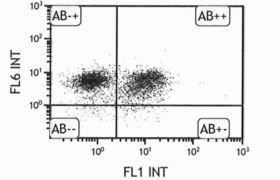 CD31 Antibody (A14716)