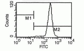 LAMP1 Antibody (A14750)
