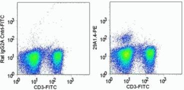 NKp46 Antibody (A14762)