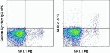 KLRG1 Antibody (A14772)