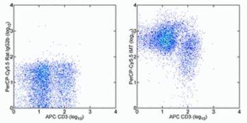 CD44 Antibody (A14791)