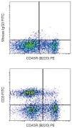 CD3e Antibody (A15812)
