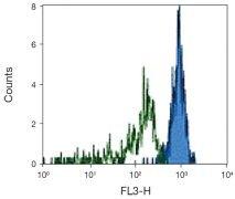 CD33 Antibody (A16215)