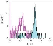 CD116 Antibody (A16394)