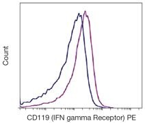 Interferon gamma Receptor 1 / CD119 Antibody (A16396)