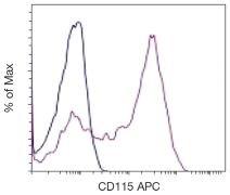 M-CSF Receptor / CD115 Antibody (A16416)