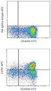 CCR7 / CD197 Antibody (A18390)
