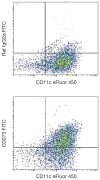 CD273 Antibody (A18405)
