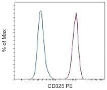 N-cadherin / CDH2 Antibody (A18409)