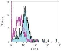 TLR4 / CD284 Antibody (A18433)