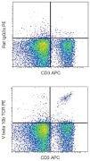 TCR V beta 10b Antibody (A18479)