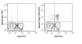 Foxp3 Antibody (A18629)
