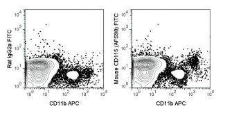 CSF1R Antibody (A18659)