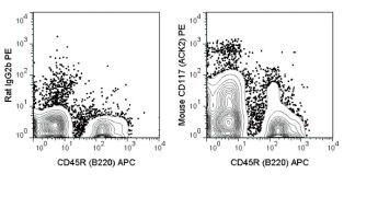 c-Kit Antibody (A18682)