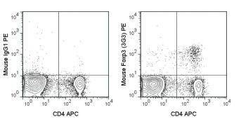 FOXP3 Antibody (A18690)