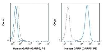 GARP / LRRC32 Antibody (A18697)