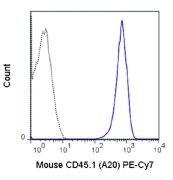 CD45.1 / Ly5.1 Antibody (A18711)