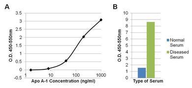 Mouse IgG (H+L) Secondary Antibody (A27024)