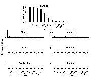 Rabbit IgG (H+L) Secondary Antibody (A27033)