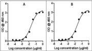 Rabbit IgG (H+L) Secondary Antibody (A27036)
