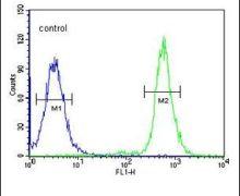 A2ML1 Antibody (PA5-24660)
