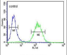 ACSBG2 Antibody (PA5-26853)