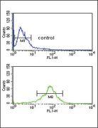 ACOT8 Antibody (PA5-26152)