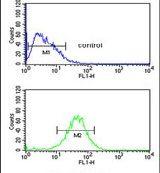 BAF53B Antibody (PA5-25247)