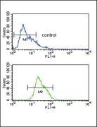 Alcohol Dehydrogenase 1C Antibody (PA5-25448)