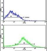 beta-2 Adrenergic Receptor Antibody (PA5-14118)