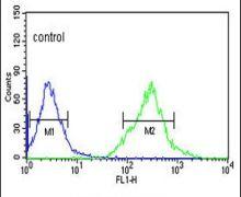 AFMID Antibody (PA5-26183)