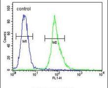 AKT1 Antibody (PA5-23780)