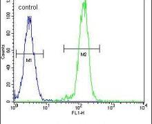 AKT2 Antibody (PA5-13759)