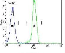 AKT2 Antibody (PA5-13760)