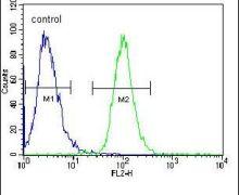 AKT2 Antibody (PA5-13761)