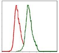 ALPL Antibody (MA5-17030)