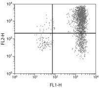 IL-6 Antibody (AMC0864)