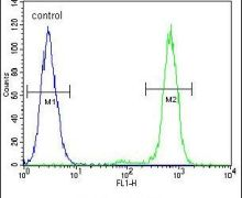 APC5 Antibody (PA5-24454)